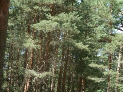 Bosque Fuenfría - Senderismo entre semana; lagunas de peñalara